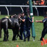 เมลเบิร์นคัพ ม้าที่บาดเจ็บ ต้องถูกปลดออกจากสนาม