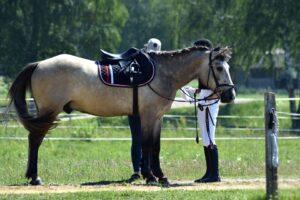 นักขี่ม้าไม่แนะนำ